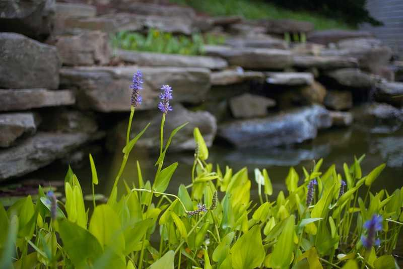 A photograph of a stone garden with water flowing and lavendar flowers in the foreground.